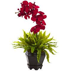 Birds Nest & & Orchid Floral Arrangement