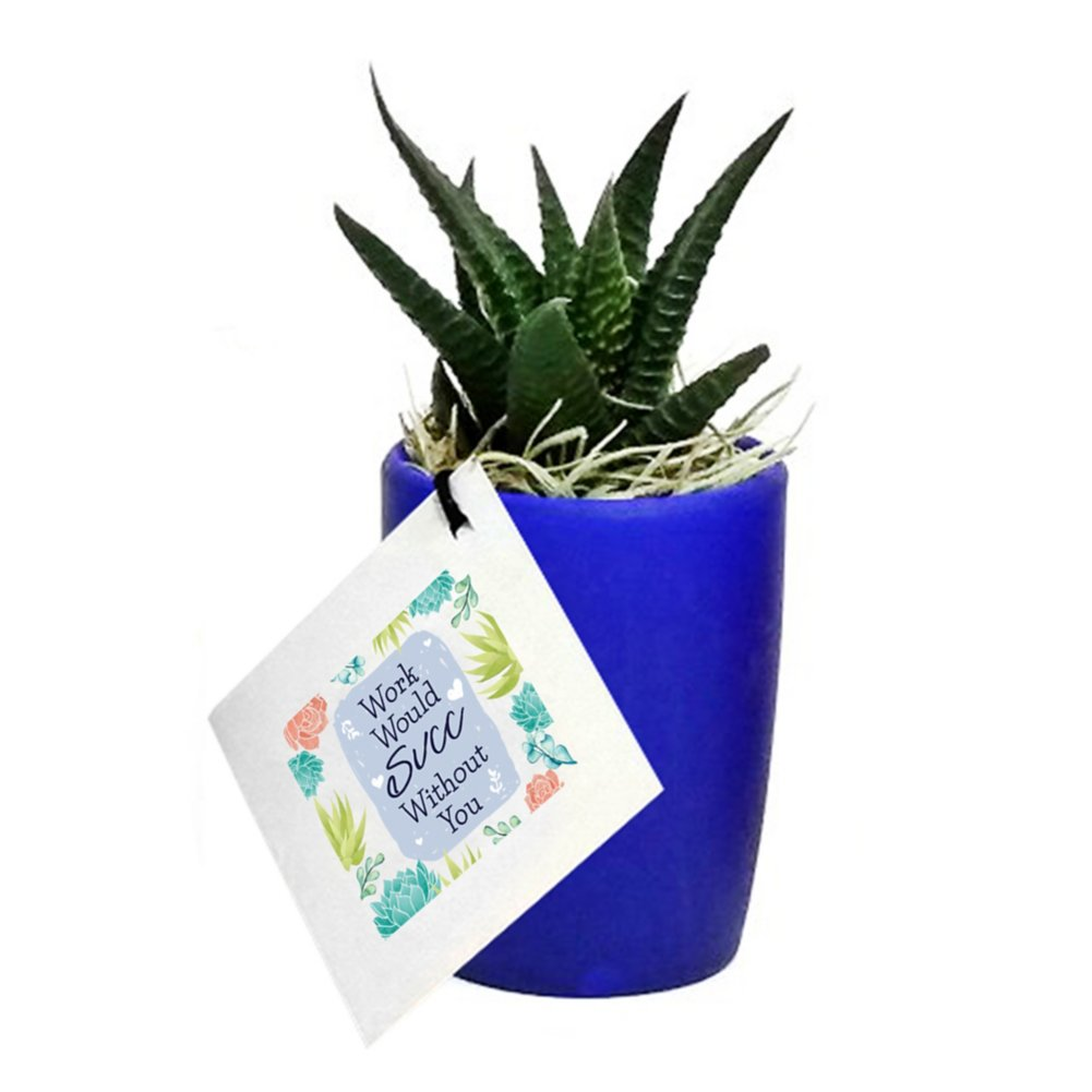 View larger image of Precious Potted Praise Plants - Work Would Succ
