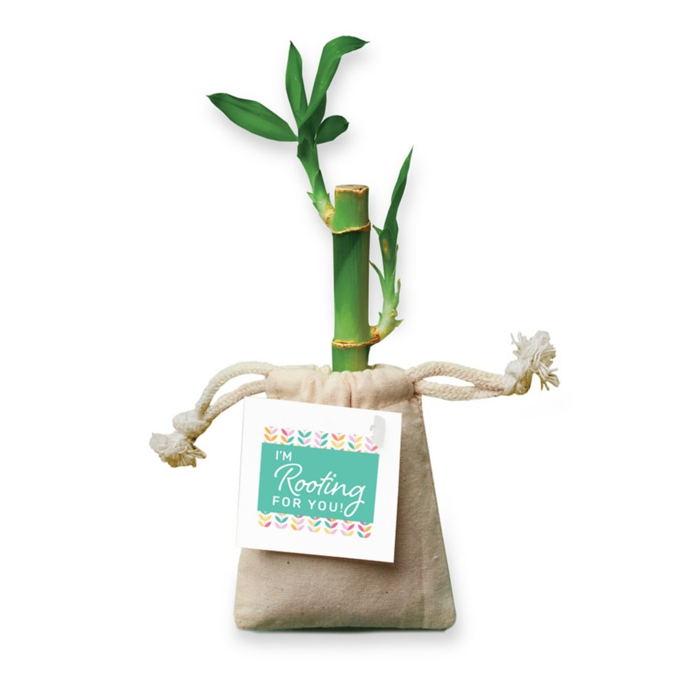 View larger image of Appreciation Bamboo Plant Bags - I'm Rooting For You