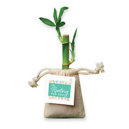 Appreciation Bamboo Plant Bags - I'm Rooting For You