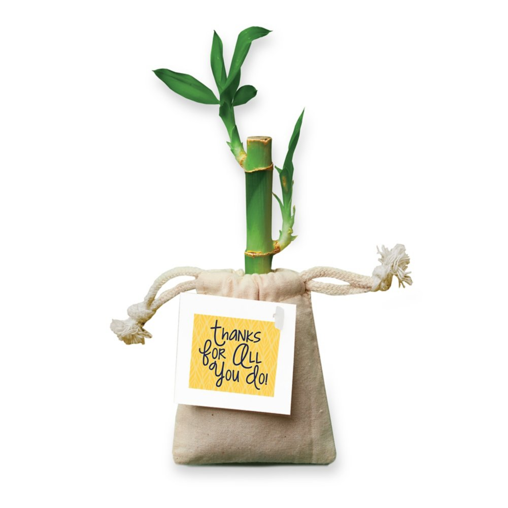 View larger image of Appreciation Bamboo Plant Bag - Thanks for All You Do