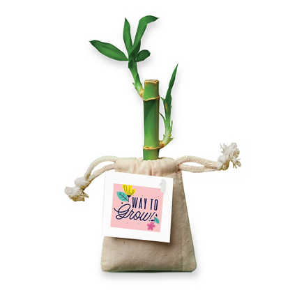 Appreciation Bamboo Plant Bags - Way to Grow
