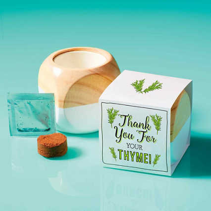 Modern Desktop Planter - Thyme: Thank You For Your Thyme