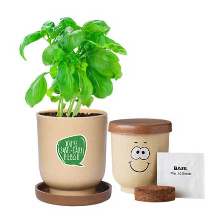 Silly Faces Eco-Planter - Basil