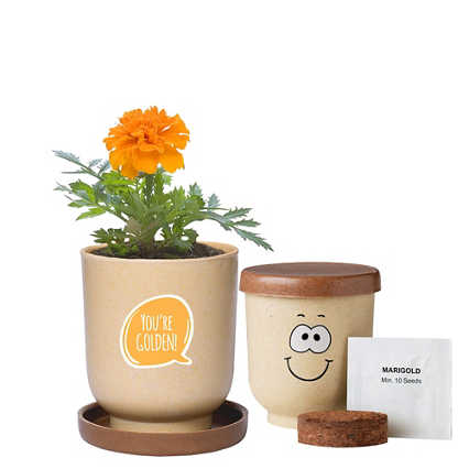 Silly Faces Eco-Planter - Marigold