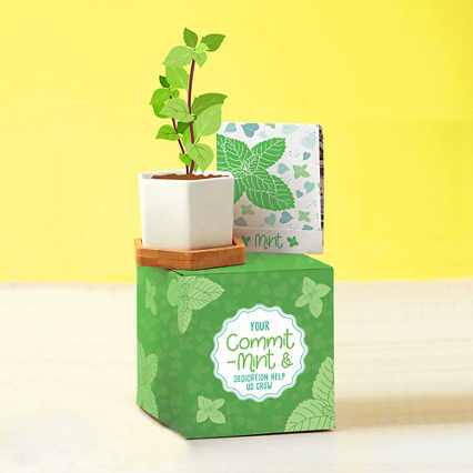 Perfect Match Planter & Seed Set - Mint