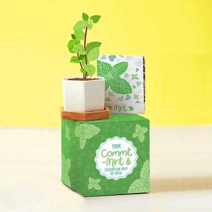 Perfect Match Planter & Seed Set - Mint