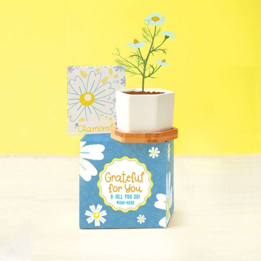 View larger image of Perfect Match Planter & Seed Set - Chamomile