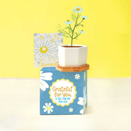 Perfect Match Planter & Seed Set - Chamomile