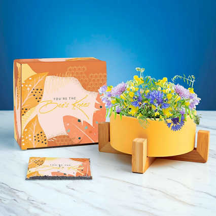 Haven Planter + Seed Set - Bee's Knees