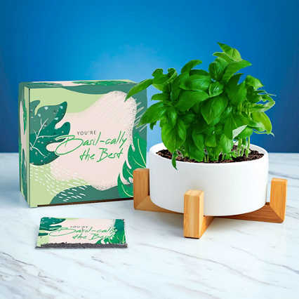 Haven Planter + Seed Set - Basil-cally the Best