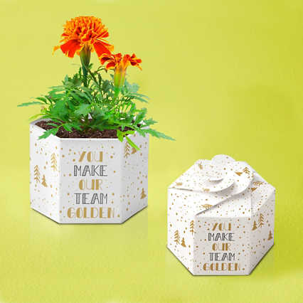 Pop-Up Planter Starter Kit - Golden Team