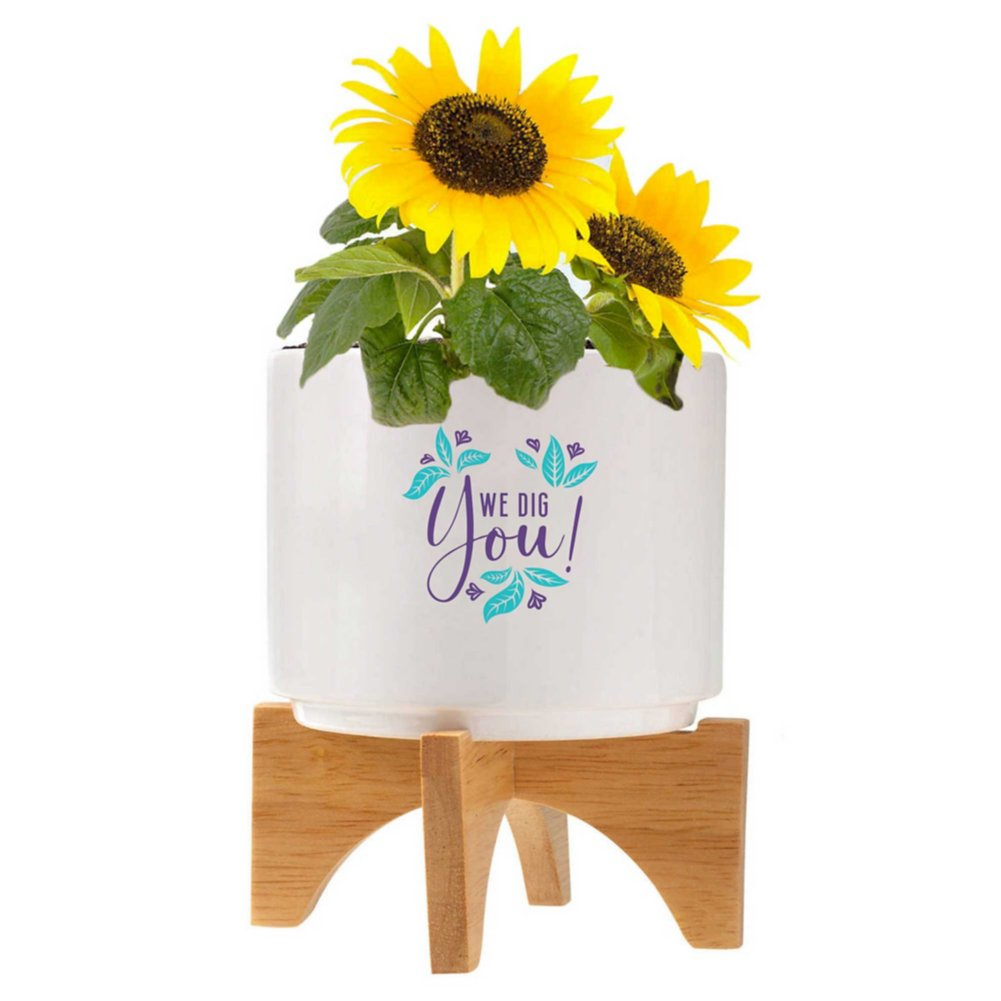 View larger image of Mod Vibes Ceramic Planter Kit - We Dig You