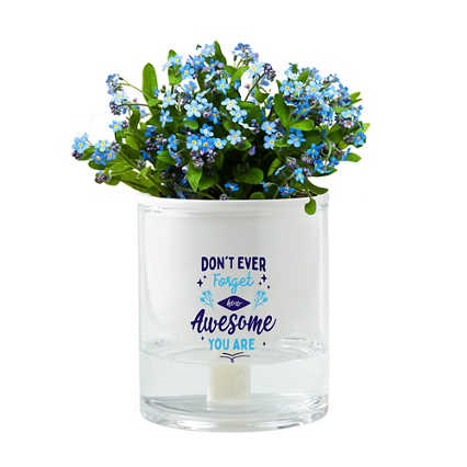 Just Right Self-Watering Planter Kit - Don't Ever Forget