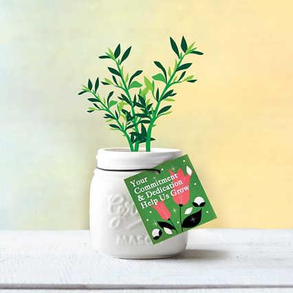 Petite Mason Jar Planter - Help Us Grow