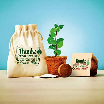 Plantable Encouragement Set - Dedication & Commit-mint
