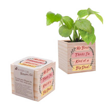 Appreciation Plant Cube - My Boss Thinks