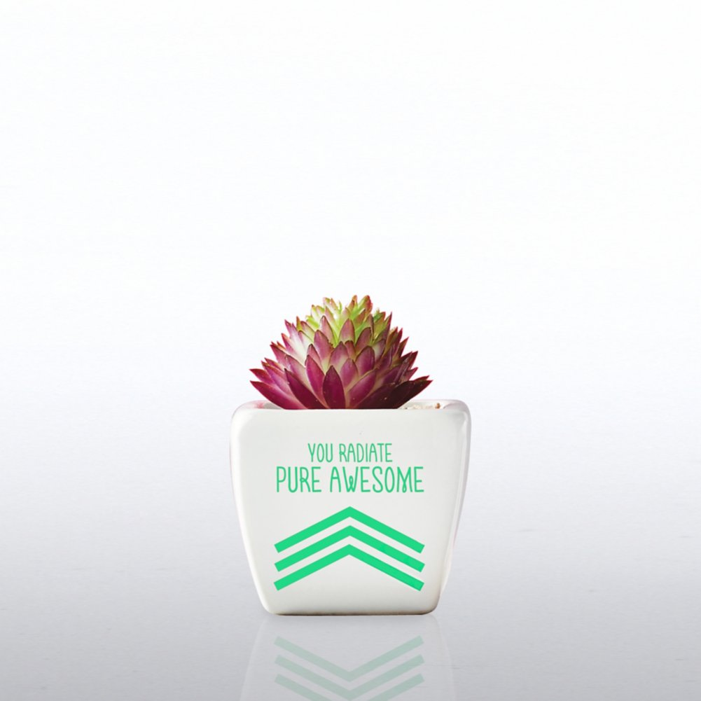 View larger image of Petite Faux Succulent - You Radiate Pure Awesome