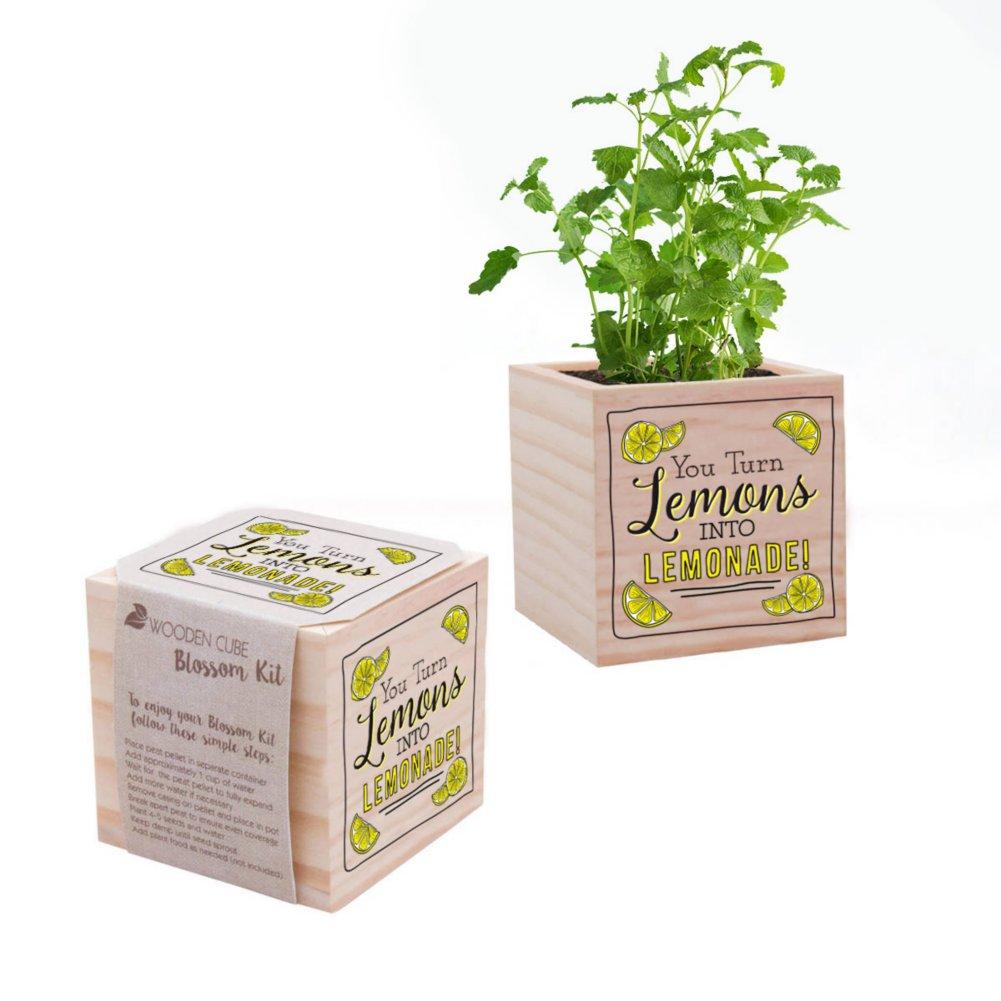 View larger image of Appreciation Plant Cube - Lemons To Lemonade