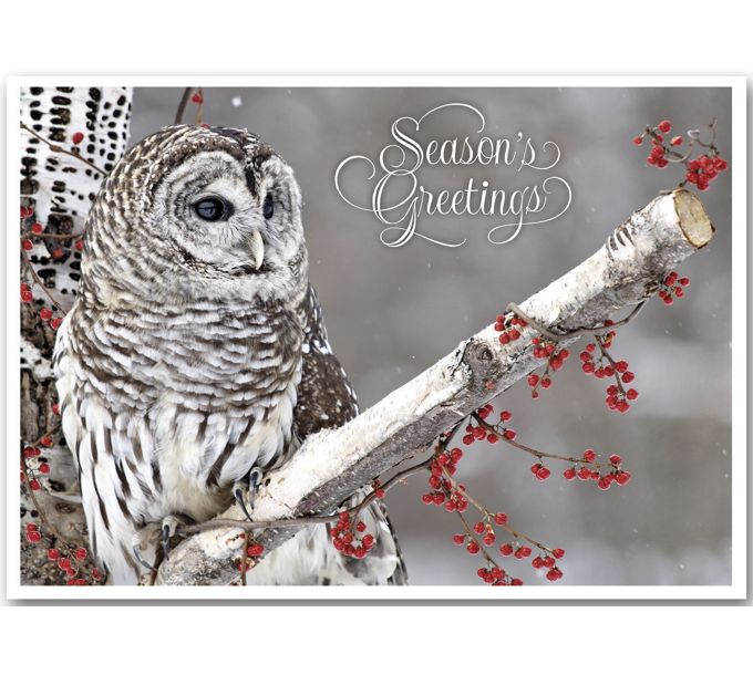 Winter Owl Holiday CardsHP13311