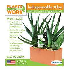 Dunecraft Indispensable Aloe Plant Kit