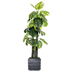78 Inch Tall Indoor/Outdoor Monstera Ceriman In Faux-Concrete Fiberstone Pot