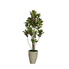 86 Inch Tall Croton Tree With Multiple Trunks In Planter